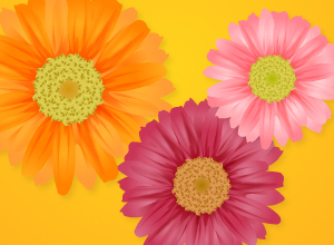Vector Flower (Gerbera)