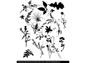 Floral Plant Graphics Vector