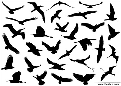 flying_birds